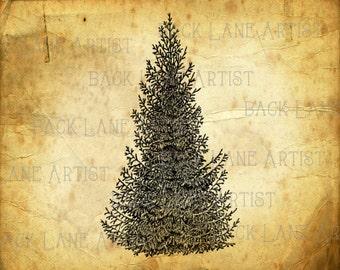 Spruce, Pine, Fir Tree Christmas Tree Clipart Lineart Illustration Instant Download PNG JPG Digi Line Art Image Drawing L446