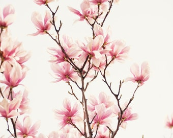 pink flower photography - pink tulip trees, pink home decor, nature art, pink wall art, nursery decor - Japanese Magnolia II