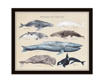 Whales of the Sea, Art Print, Wall Art, Beach Cottage Decor, Coastal Art, Sea Life, Giclee, Illustration, Print, Whale Print, Nautical Art