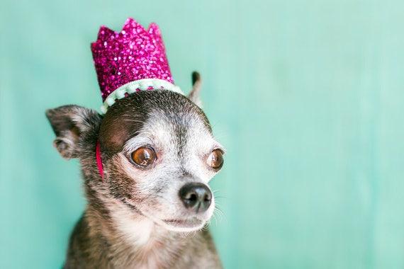 Pet Birthday Crown    Dog Hat     Dog Crown    Kitty Crown    Cat Birthday Crown Hat    Animal Birthday Hat    Dog Costume