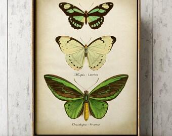 Butterfly print, Butterfly poster, green butterflies wall decor, scientific butterflies chart, vintage butterfly