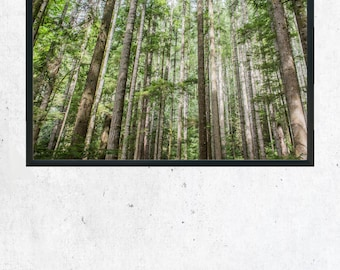 Forest Trees Photography Print, Wall Art