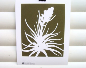 Art Print 10x8 - Chocolate Brown Tillandsia Airplant - Modern Botanical Floral Pretty Papercut Design