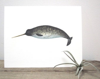 Narwhal Watercolor Giclée Print