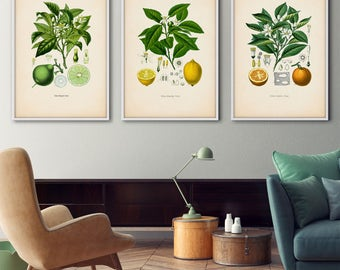 Antique fruit print set, Citrus – Botanical print set, Botanical print, Kitchen art, Botanical set, Botanical illustration, Lemon poster