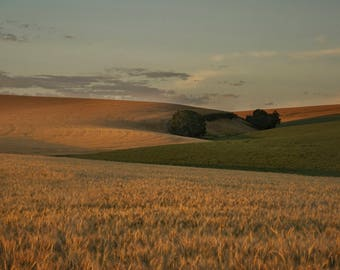 After the Harvest in Walla Walla