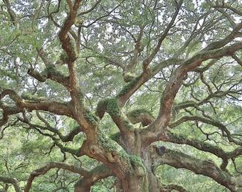 Angel Oak, Tree Photography, Angel Oak Tree, Charleston Photo Art, Johns Island Plantation, South Carolina, Tree Wall Art, Angel Oak Canvas