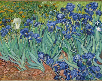 Irises by Vincent Van Gogh Fine Art Reprint.