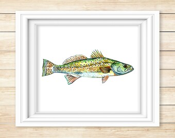 Spotted Seatrout Watercolor Print