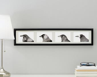 Bird Art Print Prints of four pen & ink drawings of birds (Raven, Jackdaw, Crow and Rook)