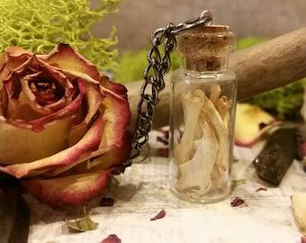 Miscellaneous mouse bone glass vile necklace