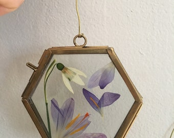 Crocus Snowdrop Hexagon