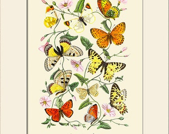 Butterfly and Botanical Print, Art Print with Mat, Note Card, Natural History Illustration, Wall Art, Vintage Wall Decor, Butterfly Prints