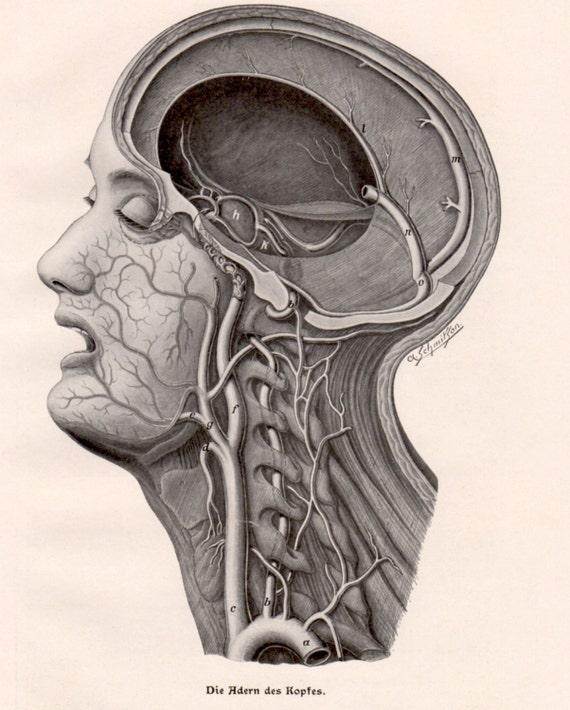 1924 human head human body anatomy antique print fritz ccuart Gallery