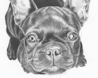 Custom animal Portrait au Graphite - 5 x 5 ou 5 x 7