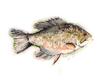 Limited Edition Fish Art Print - Whimiscal Creation of Brook Trout and Rock Bass
