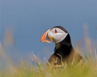 The Puffin DSC0010
