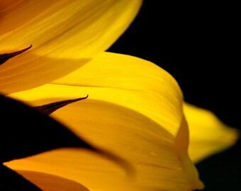 Sunflower photo, yellow flower photo, summer flower decor, colorful flower art, botanical print, nature flower art, sunflower decor