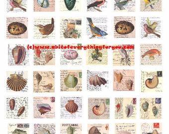 "vintage birds eggs eggs seashells postcards letters clip art digital download collage sheet 1"" inch squares graphics images craft printables"