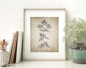 Oregano Herb Print - Oregano Plant Illustration - Oregano Botanical - Digital Art - Printable Art - Single Print #158 - INSTANT DOWNLOAD