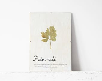 Pressed Herb wall decor- Parsley in Frame (3)