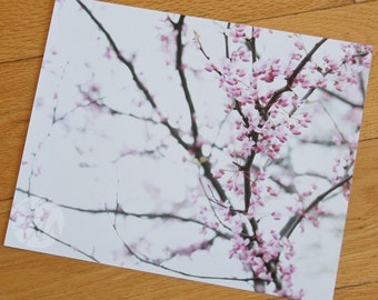 Photograph Print - Redbud Tree in Bloom