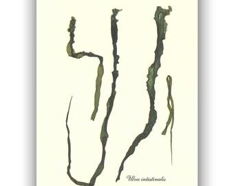 Pressed Seaweed, natural seafan, Seaweed art, seaweed pressing, Sea lettuce, Botanical collage, coastal Art, beach cottage decor,  5x7