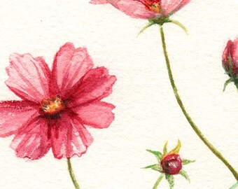 Poppy Love Digital Printable Floral Clip Art
