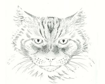 Cat portrait: Licio. Numbered and signed author print.