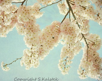 Cherry Blossom Photograph Shabby Chic Pink Blossoms Blue Sky  Sping Flowers Pastel Pink Teal Wall Art 8x8