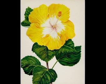 "MATTED Vintage Hawaiian Flower Print - ""Halekulani"" c. 1938 - Vintage Botanical Book Plate - Cottage Decor - Matted Floral Print"
