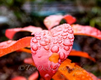Droplets on a Leaf