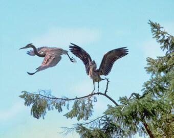Herons, Blue Heron, Heron Print, Wildlife Photography, Nature Prints, Bird Wall Art, Bird Decor, Gift for Birder, Blue Art,Woodland Creature