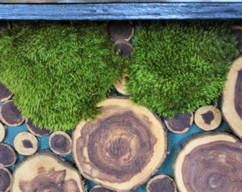 Mood Moss Preserved-By the foot or Bulk Moss-Floral supplies-Wedding Supplies-Fairy Garden Parties-NO WATER NEEDED