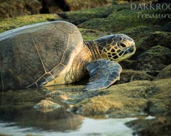 Hawaiian Sea Turtle - Beach Ocean Photography Print
