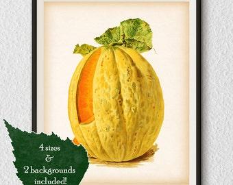 Kitchen prints, Fruit print, Fruit wall print, Antique kitchen print, Home print, Kitchen print vintage, Vintage print, Printable prints #52