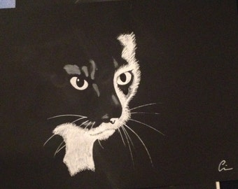 Cat drawing white on black