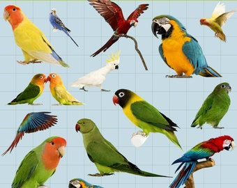 Parrot Clipart, Birds clipart, Bird Clip Art, Parrot Print, Animal Clipart, Printable, Transparent Background, PNG Files, Instant Download
