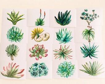 Succulents Print Set, Set of 16, Horizontal