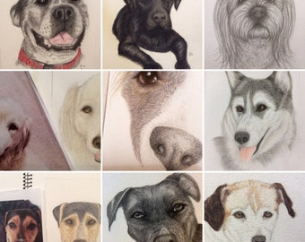 Pet dog portraits