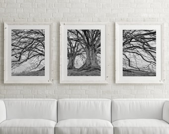 Tree Art Set of 3 Prints Nature Art Tree Print Large Wall Art Prints Black and White Printable Poster Digital Download Scandinavian Print