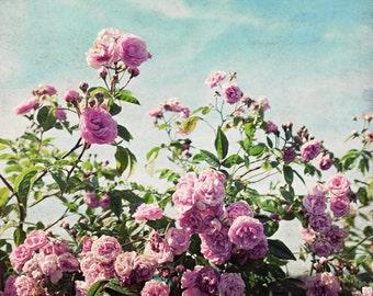 "Botanical Photography - Pink Aqua Wall Art - Cottage Chic - Art For Her - Floral Wall Art - Rose Print - Bedroom Art ""Ramblin' Rose"""