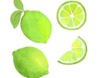 Watercolor Lime Clip art Set, Citrus, fruit, herbal, Scrap-booking, Illustration