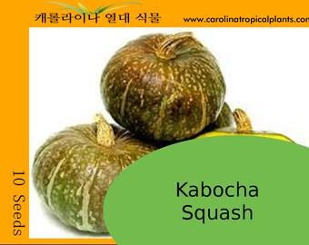 Kabocha Squash Seeds - 10 Seeds