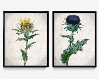 Thistle Vintage Print Set of 2 - Thistle Poster - Thistle Art - Thistle Picture - Wall Art - Home Decor - Home Art - Living Room Art