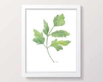 Parsley Herb print, watercolor herb painting, Kitchen art, Original Botanical Artwork,  Green Plant painting, Kitchen decor, fine art print