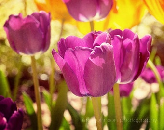 purple home decor, flower photography -purple tulips, spring decor, spring landscape, nature, purple wall decor, tulip photography