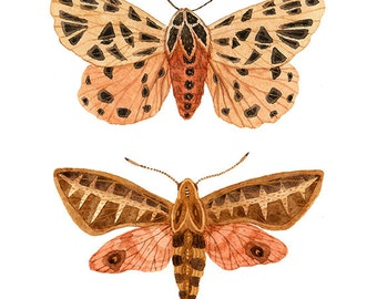 Tiger and Sphinx Moth Specimens Print, giclee art print, butterflies and moths illustration, watercolor