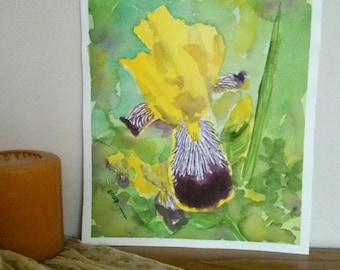 Original watercolor painting - yellow iris with purple tiger falls