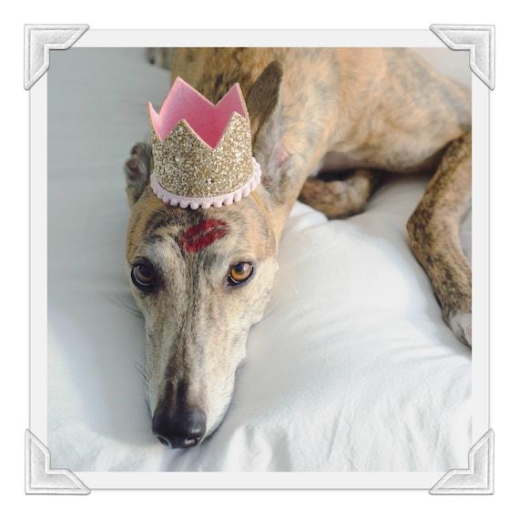 Birthday Crown Hat || Dog Birthday Hat || Pet Party Hat || Cat Kitty Puppy Pig